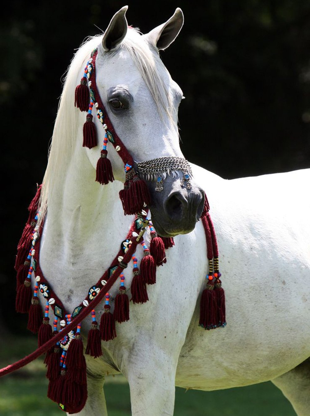 Saudi Arabia S Most Beautiful Horses Ride In The Kingdom S Famed Souq Okaz Festival About Her