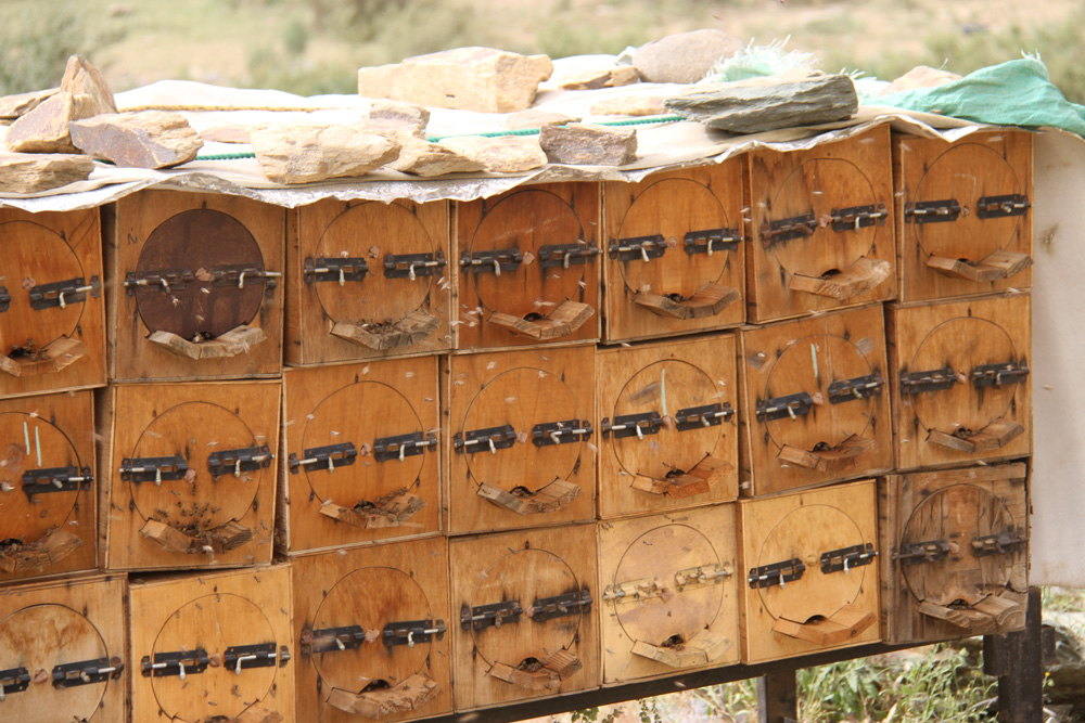 Saudi Arabia Hosts One of the Largest Honey Festivals in the